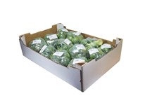 Brokolica NL čerstvá 12x500 g fólia
