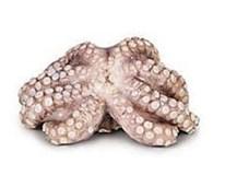 Chobotnica mraz. váž. cca 2-3 kg