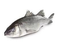 Morský vlk CHOR. chlad. váž. cca 350-550 g/ks