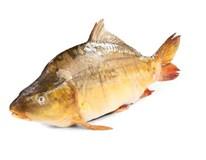 Kapor rybničný živý váž. 2-5 kg