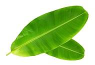 Лист банана свіжий